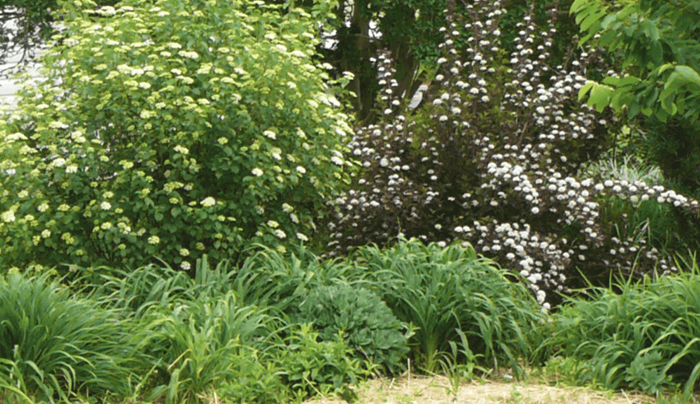 3 simple concepts to enhance your flower gardens and for Shrubs for garden borders