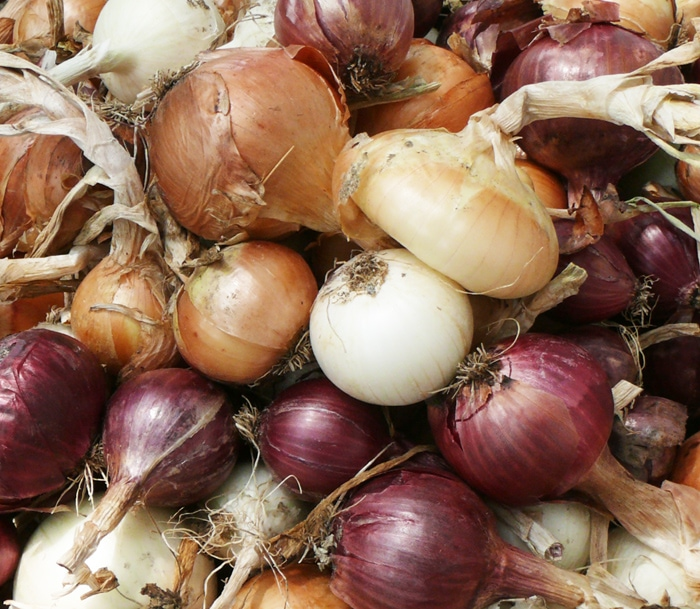 Numerous varieties of cured onions in December.
