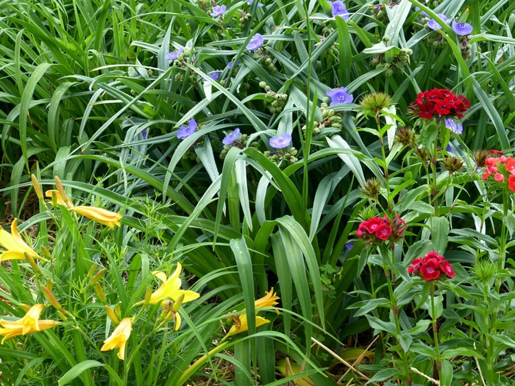 Wildflowers - Gardening with Julie