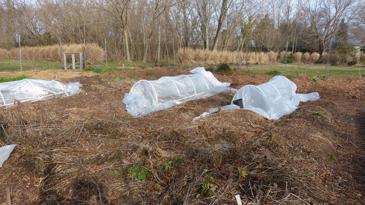 I have 3 hoop tunnels in the garden this year.  I really cold use another one --- which I will see to next year.