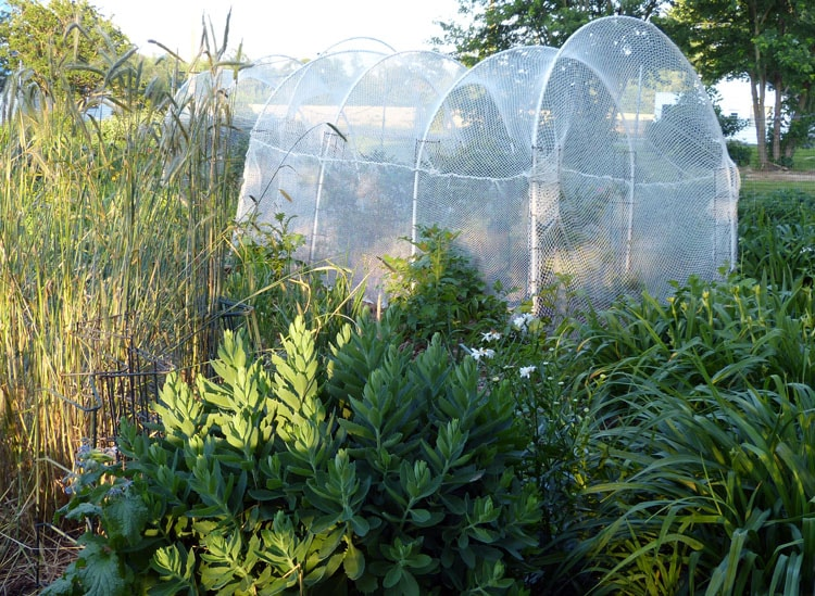 netting for blueberries and rye
