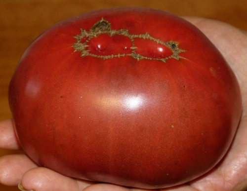 The bottom side the same tomato.
