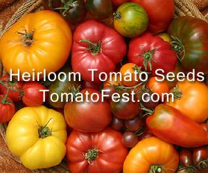 tomatofest-banner-ad-300x250