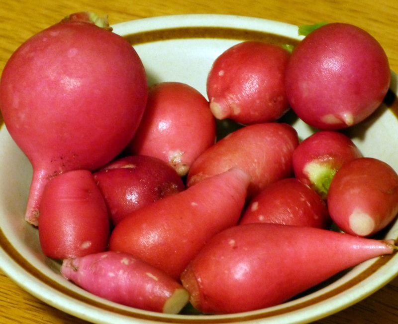 My daily ration of radishes.