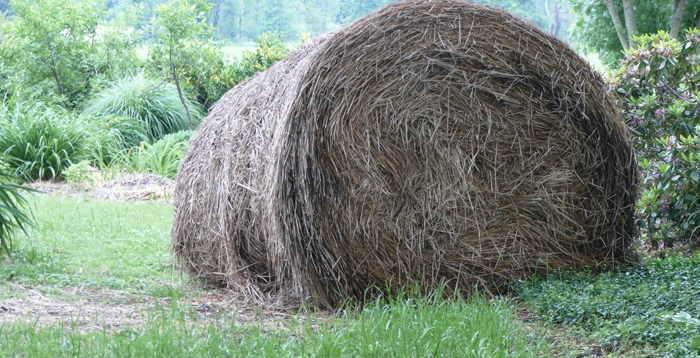 Straw that I use for mulch (and thus organic matter) in my garden.