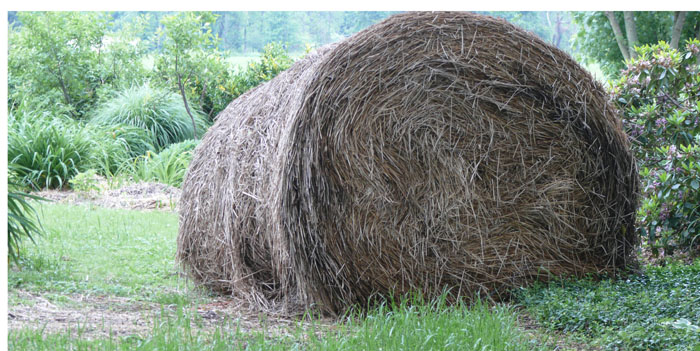 9 Comments To Hay Or Straw Which Use For Mulch