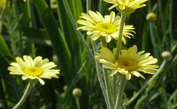 Herbs - A Perennial to Attract Beneficials to your Garden
