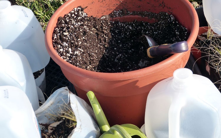 I keep a large pot of moistened grow mix handy at my work area for filling my jugs each day.