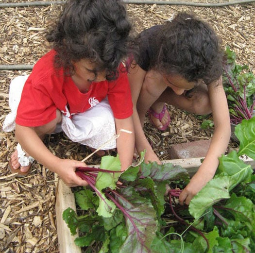 Sisters harvest beets for dinner that were grown from seed.