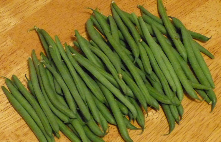 Masai beans in drought