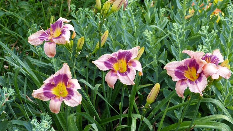 July 1, 2014. This doesn't have a things to do with garden vegetables, but these daylilies were so beautiful I wanted to end the post with them.