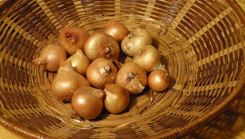 potato onions