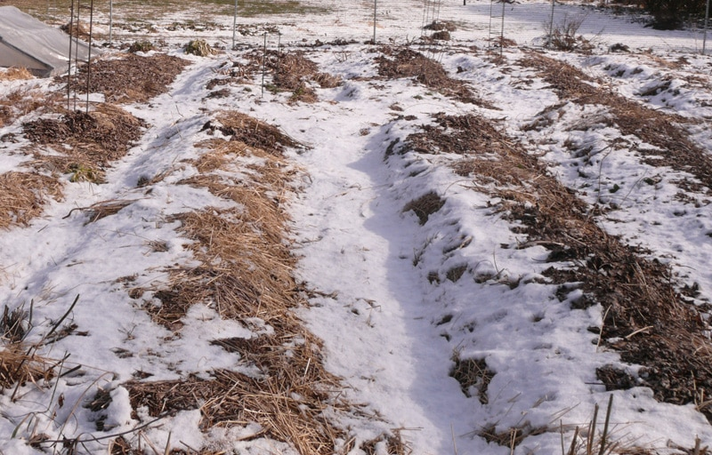 I cover the garden beds with a layers of leaves in the fall and cover with another layer of straw (either in the fall or spring).