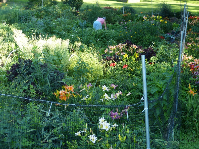 My friend Lisa stood on a ladder to take this picture of me in my garden on June 30th.